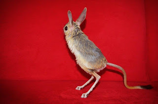 Jual Jerboa Ark,  Harga Jerboa Ark,  Toko Jerboa Ark,  Diskon Jerboa Ark,  Beli Jerboa Ark,  Review Jerboa Ark,  Promo Jerboa Ark,  Spesifikasi Jerboa Ark,  Jerboa Ark Murah,  Jerboa Ark Asli,  Jerboa Ark Original,  Jerboa Ark Jakarta,  Jenis Jerboa Ark,  Budidaya Jerboa Ark,  Peternak Jerboa Ark,  Cara Merawat Jerboa Ark,  Tips Merawat Jerboa Ark,  Bagaimana cara merawat Jerboa Ark,  Bagaimana mengobati Jerboa Ark,  Ciri-Ciri Hamil Jerboa Ark,  Kandang Jerboa Ark,  Ternak Jerboa Ark,  Makanan Jerboa Ark,  guppy breeding Jerboa Ark,  guppies for sale Jerboa Ark,  guppy care Jerboa Ark,  breeding guppiesJerboa Ark,  male guppiesJerboa Ark,  female guppiesJerboa Ark,  guppy aquariumJerboa Ark,  baby guppiesJerboa Ark,  poecilia reticulataJerboa Ark,  guppy tankJerboa Ark,  guppy fryJerboa Ark,  guppy giving birthJerboa Ark,  how long do guppies liveJerboa Ark,  guppysJerboa Ark,  guppy guppyJerboa Ark,  guppy foodJerboa Ark,  guppy breeding tankJerboa Ark,  fantail guppyJerboa Ark,  guppy breedsJerboa Ark,  guppy sJerboa Ark,  wild guppiesJerboa Ark,  guppy babiesJerboa Ark,  guppy varietiesJerboa Ark,  freshwater guppies Jerboa Ark,  guppy female Jerboa Ark,  tropical guppies Jerboa Ark,  female guppies for saleJerboa Ark,  guppy priceJerboa Ark,  raising guppiesJerboa Ark,  guppies for sale onlineJerboa Ark,  guppy infoJerboa Ark,  buy guppies onlineJerboa Ark,  guppy saleJerboa Ark,  buy guppiesJerboa Ark,  guppy diseasesJerboa Ark,  guppies onlineJerboa Ark,  caring for guppiesJerboa Ark,  best food for guppiesJerboa Ark,  food for guppiesJerboa Ark,  blue guppyJerboa Ark,  guppy breeding setupJerboa Ark,  guppy birthJerboa Ark,  guppy speciesJerboa Ark,  gestation period for guppiesJerboa Ark,  guppys onlineJerboa Ark,  guppy care sheetJerboa Ark,  guppy blue  Jakarta,  keeping guppies  Bandung,  guppies for sale cheap  Medan,  the guppy  Bali,  guppy breeding cycle  Makassar,  show guppies  Jambi,  thai guppy  Pekanbaru,  male and female guppies  Palembang,  what to feed baby guppies  Sumatera,  yellow guppy  Langsa,  guppy names  Lhokseumawe,  guppy gestation period  Meulaboh,  feeding guppies  Sabang,  guppy genetics  Subulussalam,  guppy show  Denpasar,  turquoise guppy  Pangkalpinang,  guppy fry care  Cilegon,  guppy games  Serang,  guppy gestation  Tangerang Selatan,  guppy colors  Tangerang,  guppy tank setup  Bengkulu,  trinidadian guppies  Gorontalo,  guppies having babies  Kota Administrasi Jakarta Barat,  guppy strains  Kota Administrasi Jakarta Pusat,  what do guppies eat  Kota Administrasi Jakarta Selatan,  what to feed guppies  Kota Administrasi Jakarta Timur,  guppy life span  Kota Administrasi Jakarta Utara,  how to care for guppies  Sungai Penuh,  guppy male and female  Jambi,  what is a guppy  Bandung,  guppy natural habitat  Bekasi,  german guppy  Bogor,  guppy poecilia reticulata  Cimahi,  guppy images  Cirebon,  images of guppies  Depok,  fishguppy  Sukabumi,  guppy facts  Tasikmalaya,  how many babies do guppies have  Banjar,  how big do guppies get  Magelang,  how to take care of guppies  Pekalongan,  fan tailed guppies  Purwokerto,  guppy pregnant  Salatiga,  guppy life cycle  Semarang,  temperature for guppies  Surakarta,  what are guppies  Tegal,  guppies restaurant  Batu,  guppy definition  Blitar,  guppy meaning  Kediri,  guppy size  Madiun,  define guppy  Malang,  guppy wiki  Mojokerto,  how do guppies give birth  Pasuruan,  baby guppys  Probolinggo,  guppies bar  Surabaya,  how many fry do guppies have  Pontianak,  guppy behavior  Singkawang,  how many babies does a guppy have  Banjarbaru,  where do guppies come from  Banjarmasin,  how do guppies reproduce  Palangkaraya,  what does guppy mean  Balikpapan,  what is guppy  Bontang,  types of guppy  Samarinda,  guppy guppies  Tarakan,  guppy house hours  Batam,  guppys on the go  Tanjungpinang,  guppys restaurant  Bandar Lampung,  guppies definition  Kotabumi,  do guppies eat their babies  Liwa,  gestation guppy  Metro,  bubble guppies  Ternate,  guppy  Tidore Kepulauan,  Jerboa Ark  Ambon,  Jerboa Ark  Tual,  Jerboa Ark  Bima,  Jerboa Ark  Mataram,  Jerboa Ark  Kupang,  Jerboa Ark  Sorong,  Jerboa Ark  Jayapura,  Jerboa Ark  Dumai,  Jerboa Ark  Pekanbaru,  Jerboa Ark  Makassar,  Jerboa Ark  Palopo,  Jerboa Ark  Parepare,  Jerboa Ark  Palu,  Jerboa Ark  Bau-Bau,  Jerboa Ark  Kendari,  Jerboa Ark  Bitung,  Jerboa Ark  Kotamobagu,  Jerboa Ark  Manado,  Jerboa Ark  Tomohon,  Jerboa Ark  Bukittinggi,  Jerboa Ark  Padang,  Jerboa Ark  Padangpanjang,  Jerboa Ark  Pariaman,  Jerboa Ark  Payakumbuh,  Jerboa Ark  Sawahlunto,  Jerboa Ark  Solok,  Jerboa Ark  Lubuklinggau,  Jerboa Ark  Pagaralam,  Jerboa Ark  Palembang,  Jerboa Ark  Prabumulih,  Jerboa Ark  Binjai,  Jerboa Ark  Medan,  Jerboa Ark  Padang Sidempuan,  Jerboa Ark  Pematangsiantar,  Jerboa Ark  Sibolga,  Jerboa Ark  Tanjungbalai,  Jerboa Ark  Tebingtinggi,  Jerboa Ark  Yogyakarta,