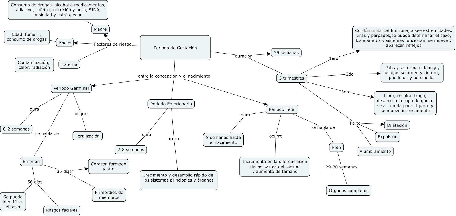Mapa conceptual: Desarrollo Prenatal | Que sea lo que debe ser