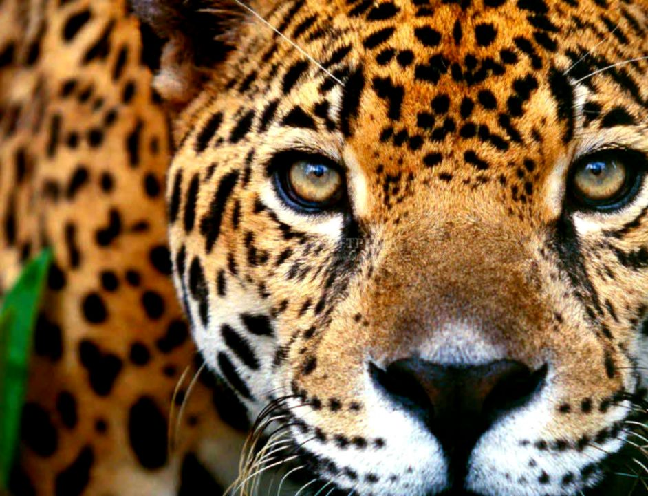 Download Screensaver Animals Collection 1 10