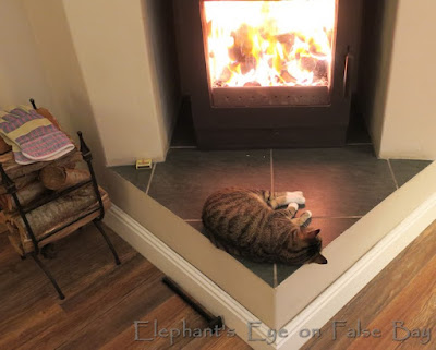 Zoë on the hearth