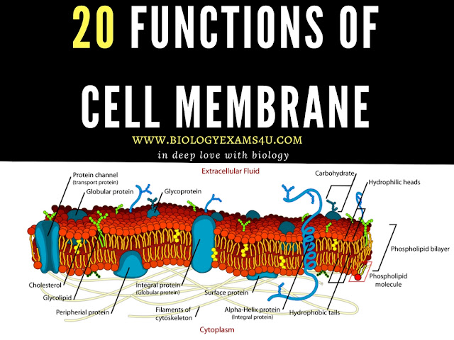 20 Functions of Cell membrane