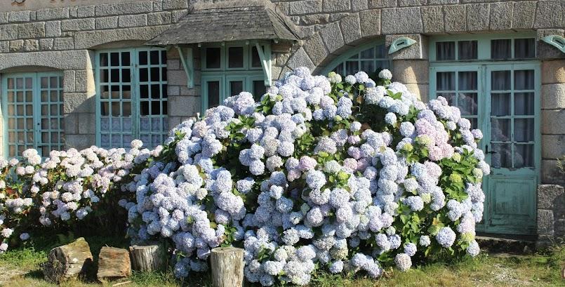 Kwiaty i granit w Locronan / Des fleurs et du granit à Locronan