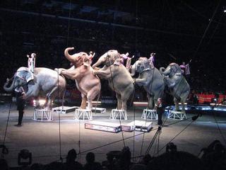 Great Atmosphere Watching Circus