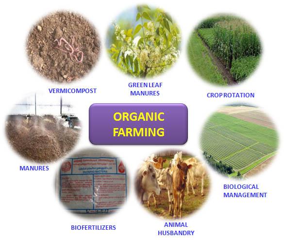 Organic Food Is It Worth It