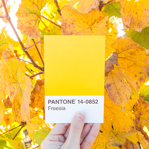 Pantone Feels Like Fall Leaves by Katelyn Wood on Instagram @ LLKCake