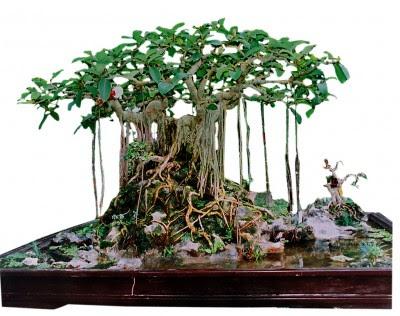 Chăm sóc cây thế cây bonsai