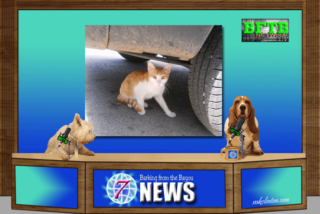 two dogs anchoring news