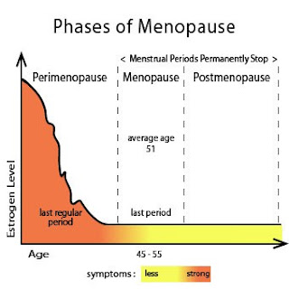 Phases of Menopause