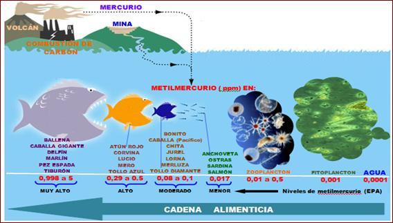 Resultado de imagen para metilmercurio