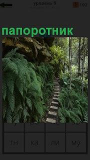 В верх поднимается тропинка и вокруг неё растет папоротник с большими листьями