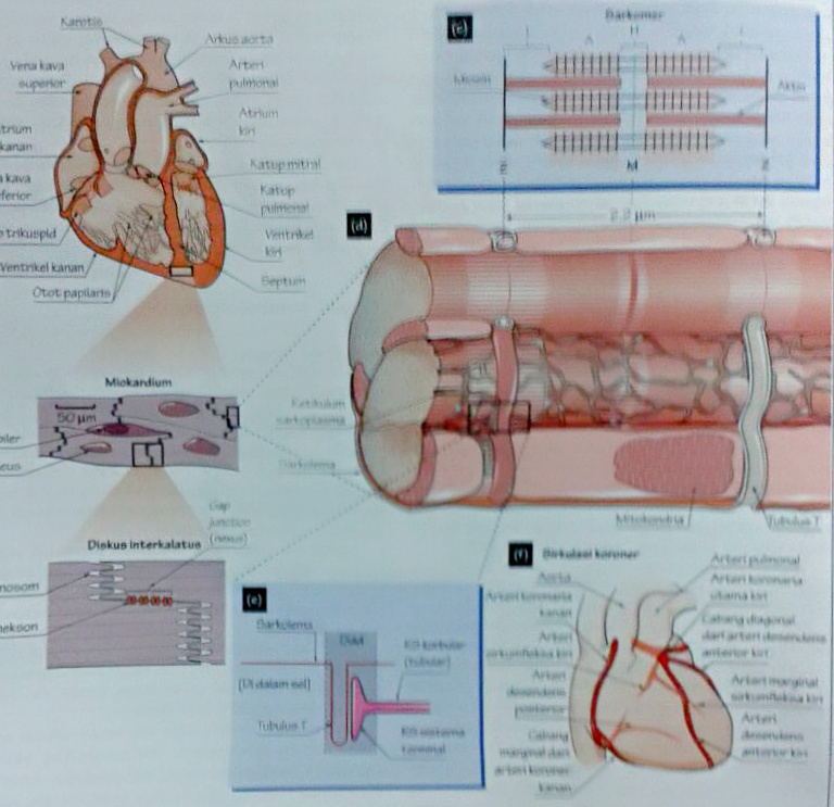 Anatomy Physiology And Supporting Body Tissue | Medical Info