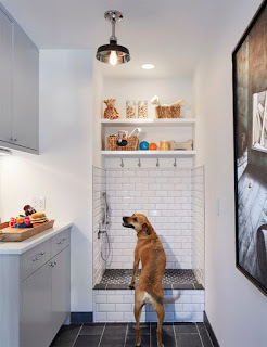 banho para cães em prédios