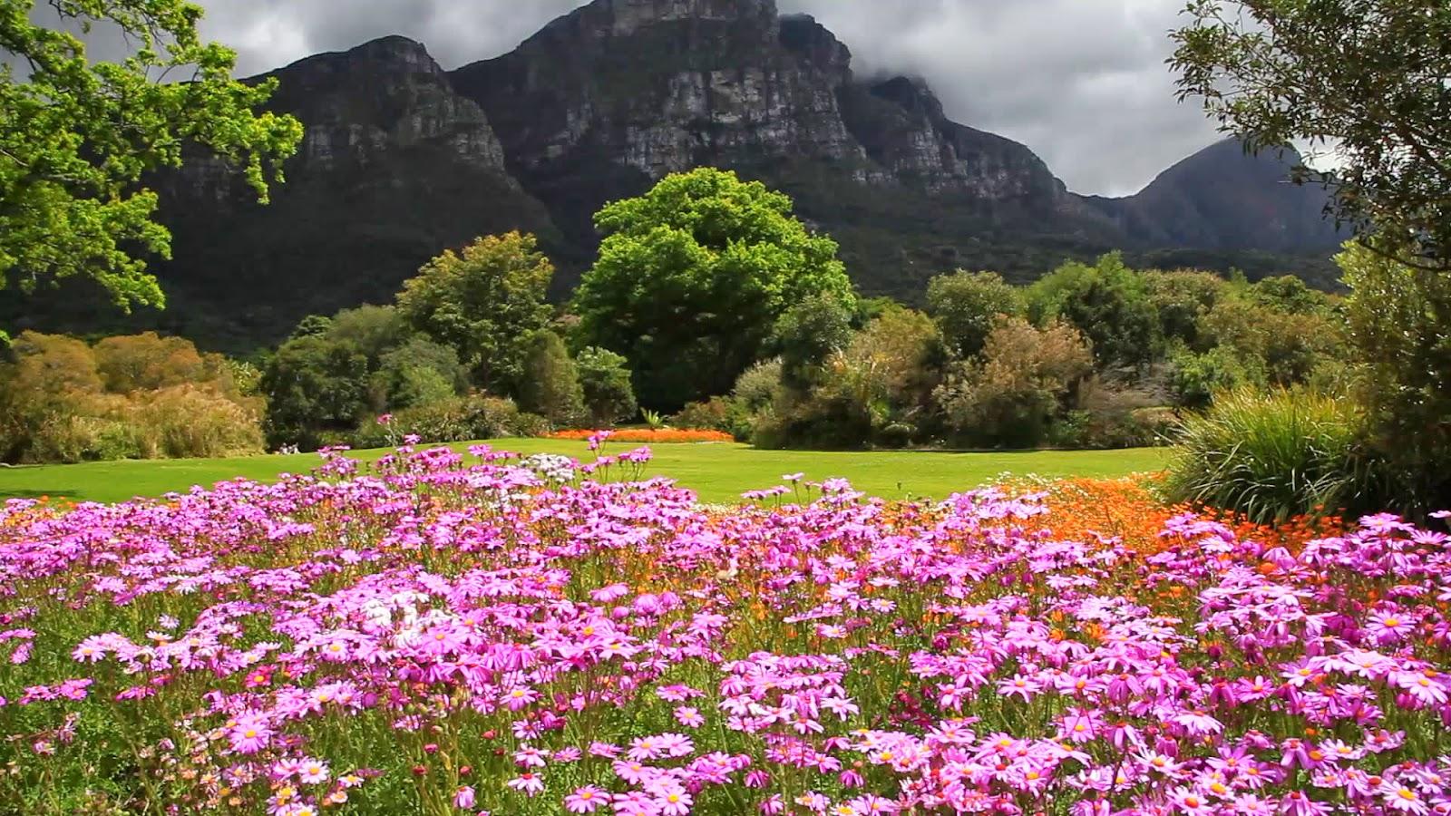 10 Inspirational Botanic Gardens | Kirstenbosch National Botanical Garden, Cape Town, South Africa