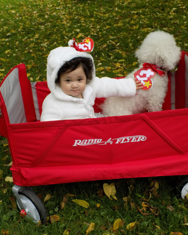 DIY Beanie Baby Halloween Costume for Babies and Dogs w/ Free Printable  Gerber Purina Giggles and Wiggles #GigglesandWiggles
