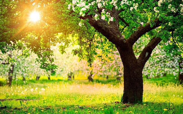 Güneş ve Ağaç