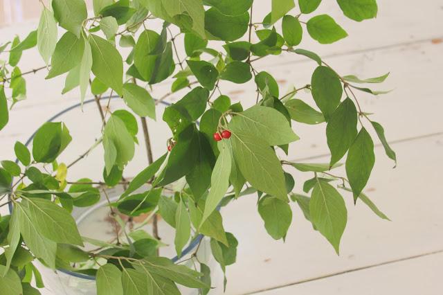 branch-berries-white-farmhouse-harvest-table