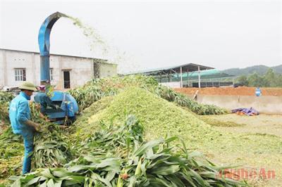 Giá nguyên liệu thức ăn chăn nuôi tăng cao