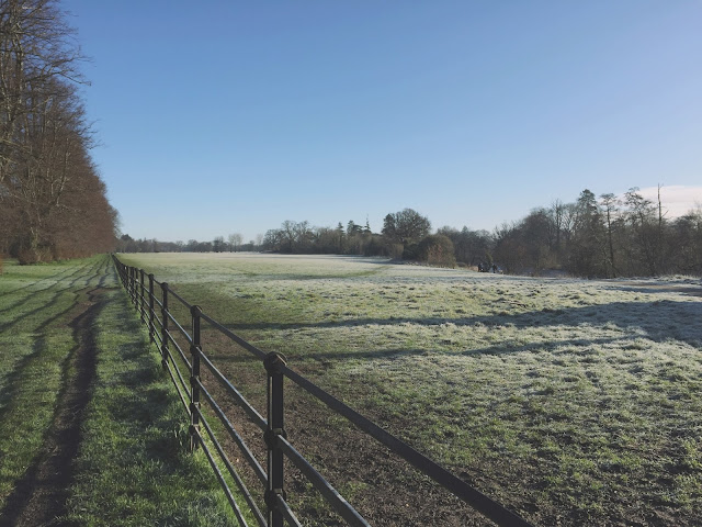 Frosty field. Morning blue sky. Park