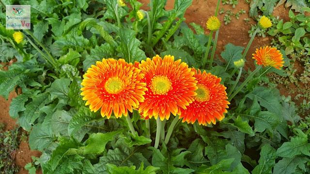 Vườn hoa Vạn Thành, Đà Lạt