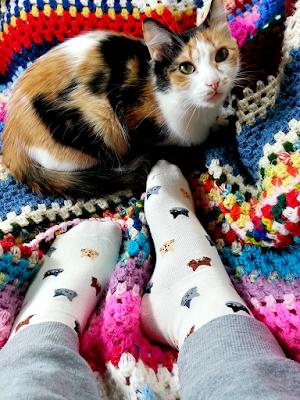 Meia bege de gatinhos