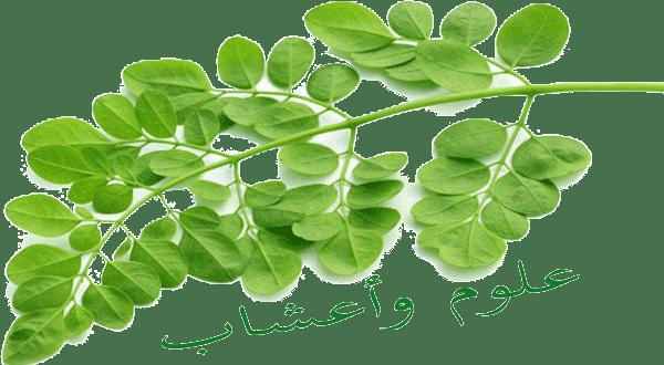 العلاج والصحة بطب الاعشاب