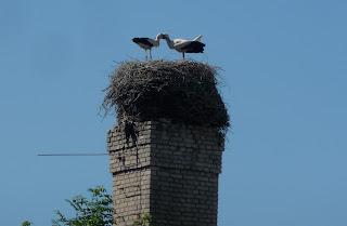 Пинск. Гнездо аистов на дымовой трубе возле площади Ленина