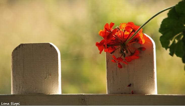 Γέμισε ο κόσμος λουλούδια και φως...!!