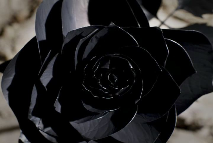 Amazing Wallpapers: Black Rose Dragon