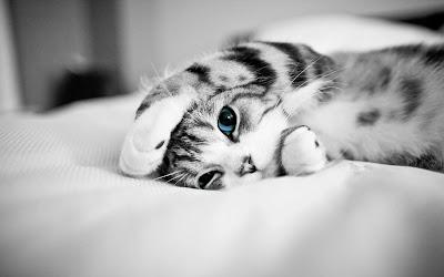 Cute Cats Kitty Pets 19