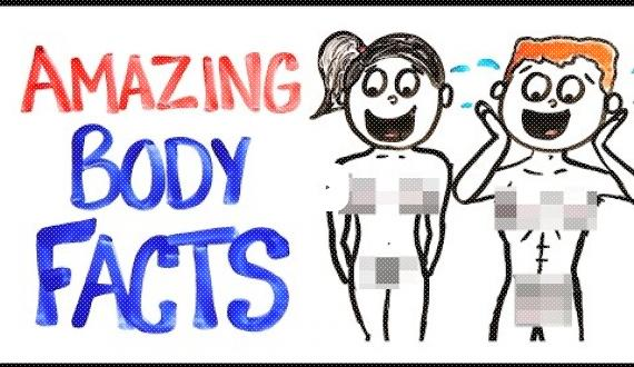 Weird Facts About Our Body