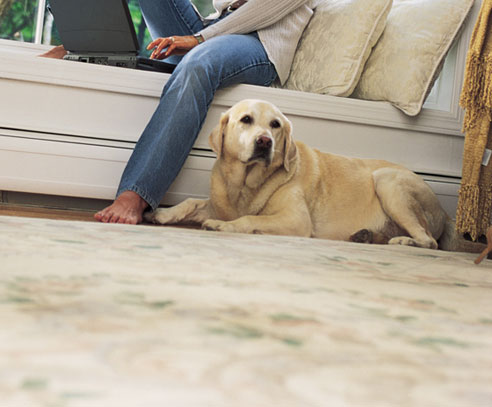 Every Pet Owner Has Once In A While Gone Through The Unpleasant Experience Of Seeing Urine Stains On Carpet Especially Process Training
