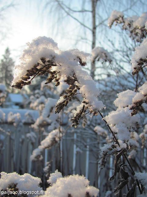 pakkasta ja lunta