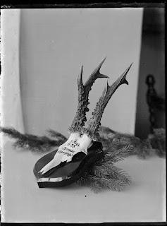 Geweih Rehbock auf Holzplatte- Thansau Eigenjagd - 3. Aug 1933 - Glasnegativ 1930-1942