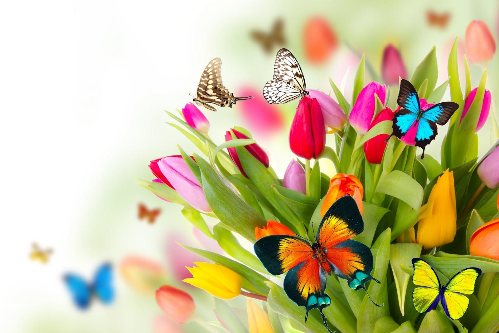 Fotografias De Mariposas Y Flores: Fotos De Flores Y Mariposas
