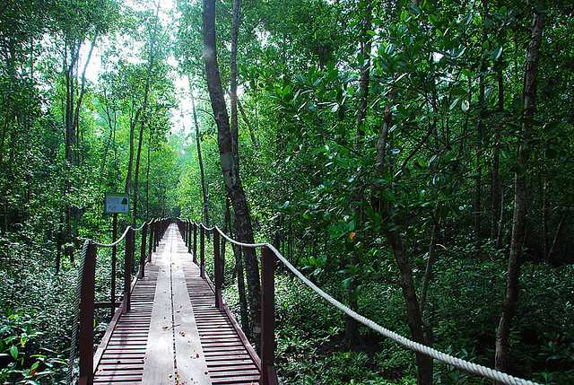 Kuala Selangor Nature Park: Top Destinations for a Day Trip from Kuala Lumpur for Couples