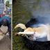 El festival chino de la carne de perro debe pararse... Tomemos acción YA!!!