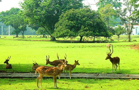 Tempat wisata kebun raya dan istana  bogor