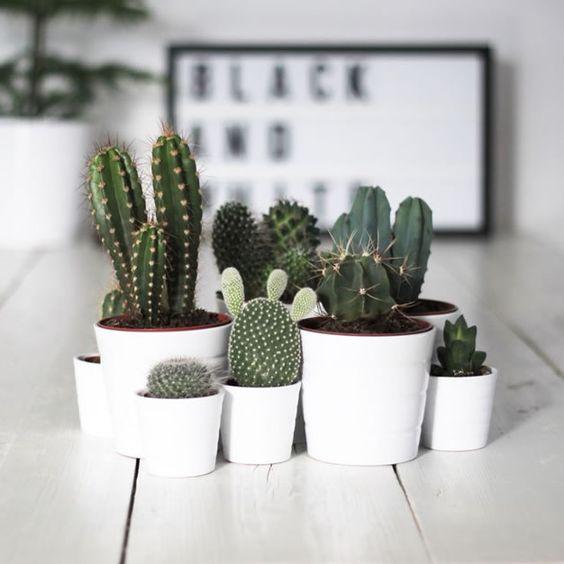 Consejos para cuidar los cactus que decoran tu casa