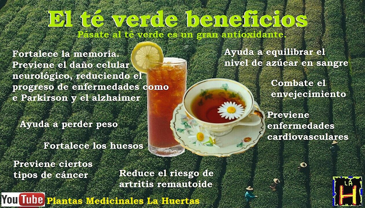 Té verde, beneficios propiedades usos ~ Remedios