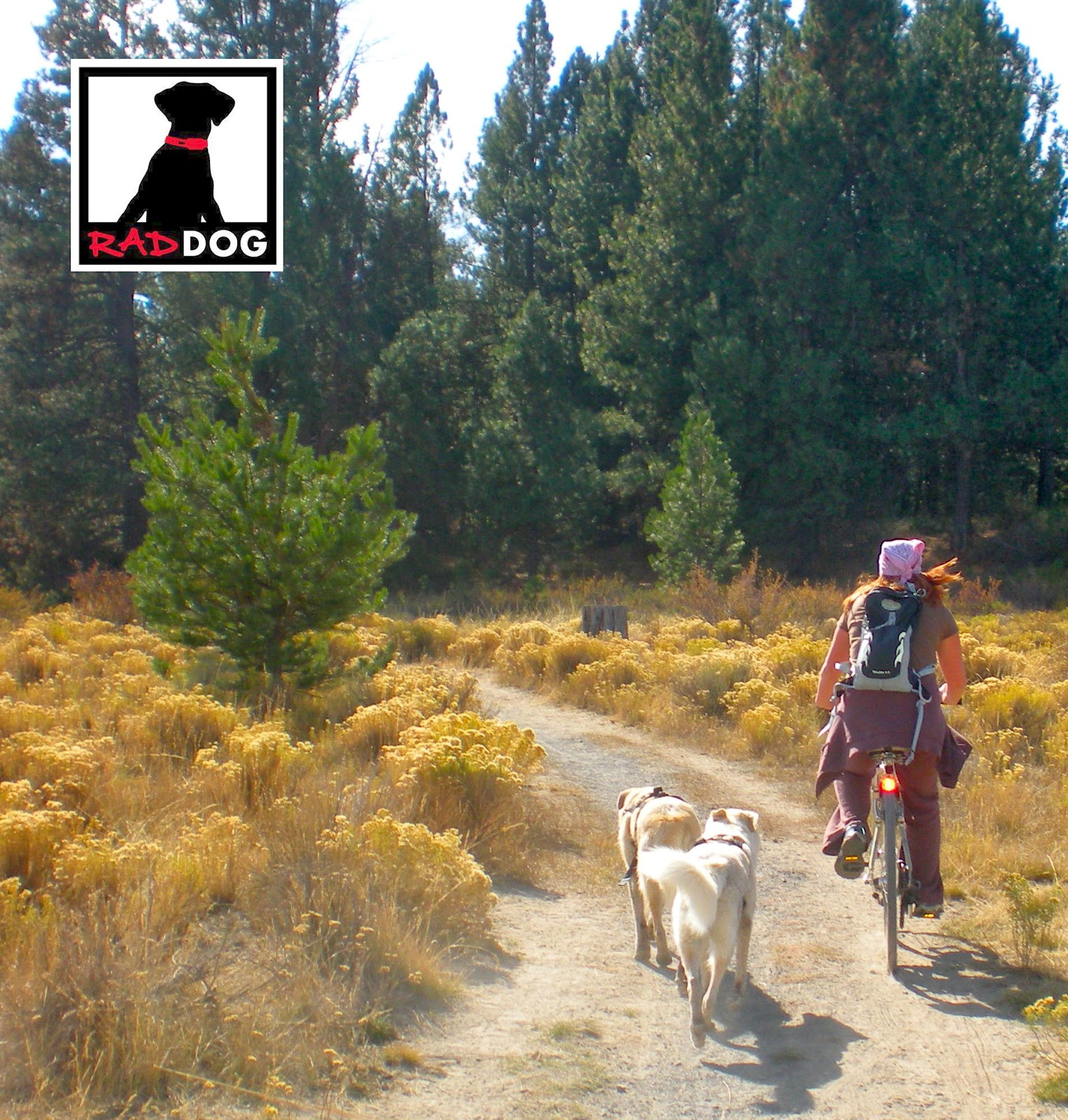 GIRL MOUNTAIN BIKING WITH DOGS ON TRAIL