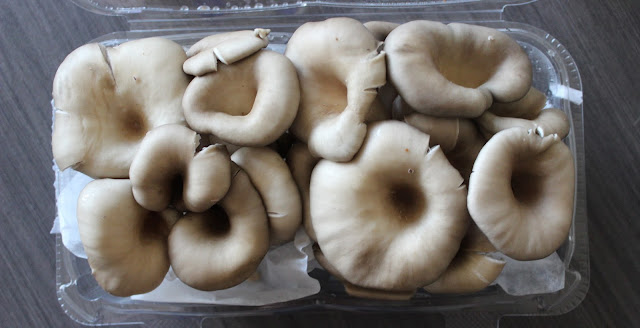 Oyster Mushrooms | A Hoppy Medium