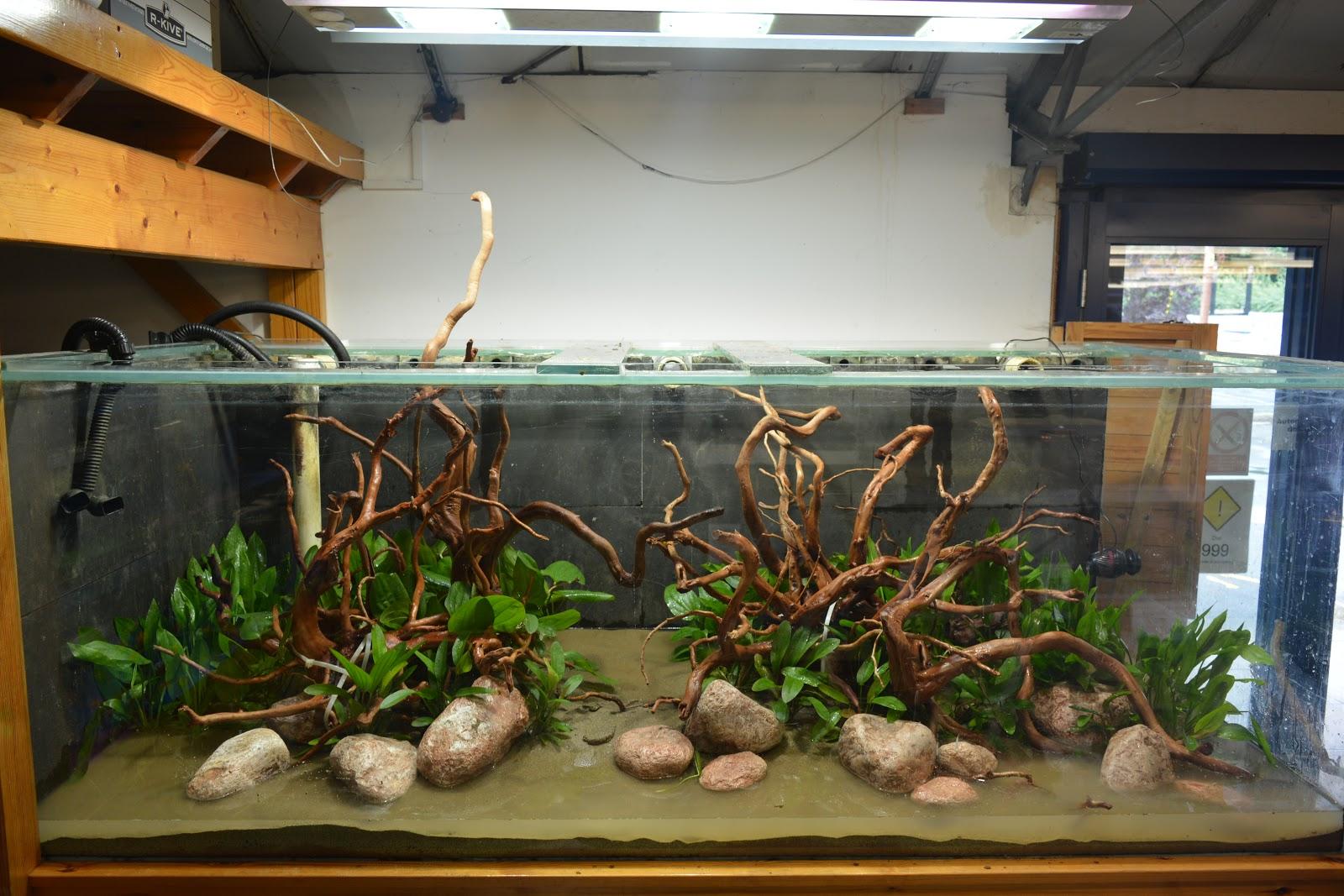 George Farmer aquascaping a 1800 litre aquarium