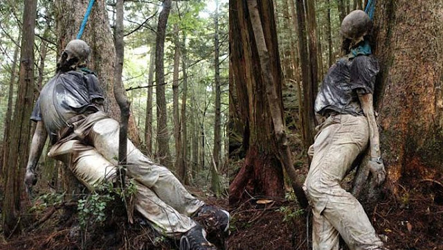 hutan aokigahara di jepang hutan tempat orang bunuh diri