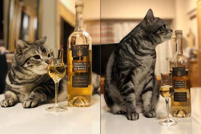 猫はグラッパRivettoのいい香りが好き