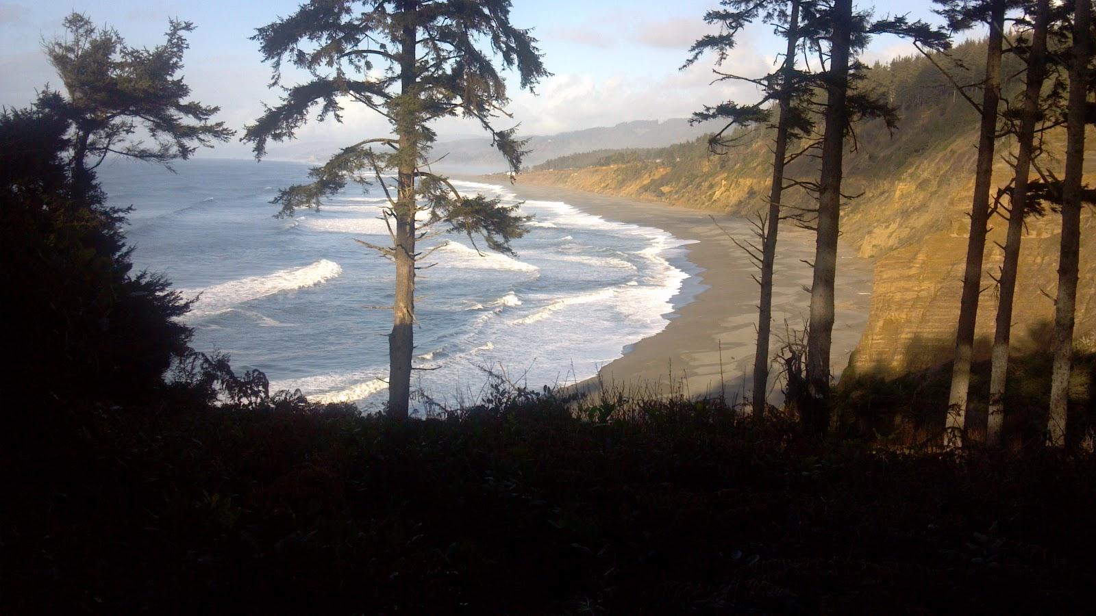 redwoods meet the ocean