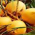 Kelapa Kuning, Dibalik Warna Cantiknya Simpan 7 Manfaat Ini