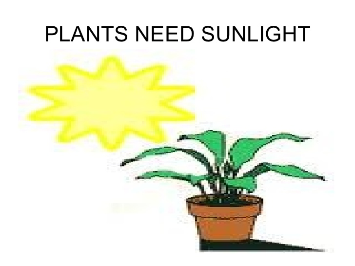 Elegant Plants Need Light To Grow So That The Process Of Photosynthesis Can Occur.  This Process, Found Only In Plants, Converts Solar Energy Into Sustenance  For ... Nice Ideas