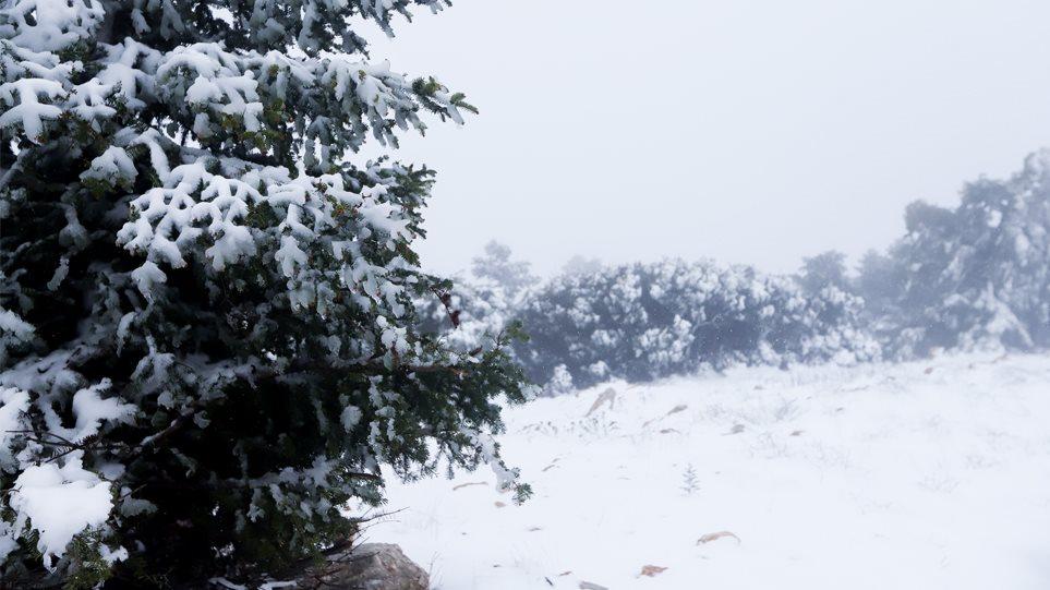 Στο «ψυγείο» η χώρα: Στους -13,2 βαθμούς Κελσίου η θερμοκρασία στον Παρνασσό