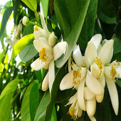 bahar alerjisine iyi gelen bitkiler nisanda adana