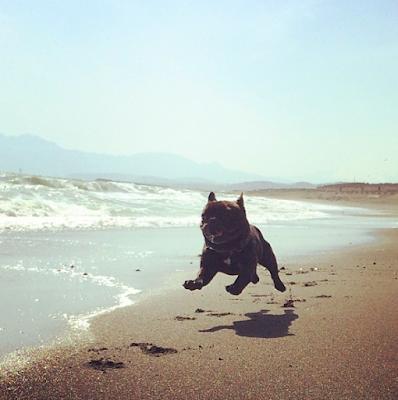 buldocek na plazi